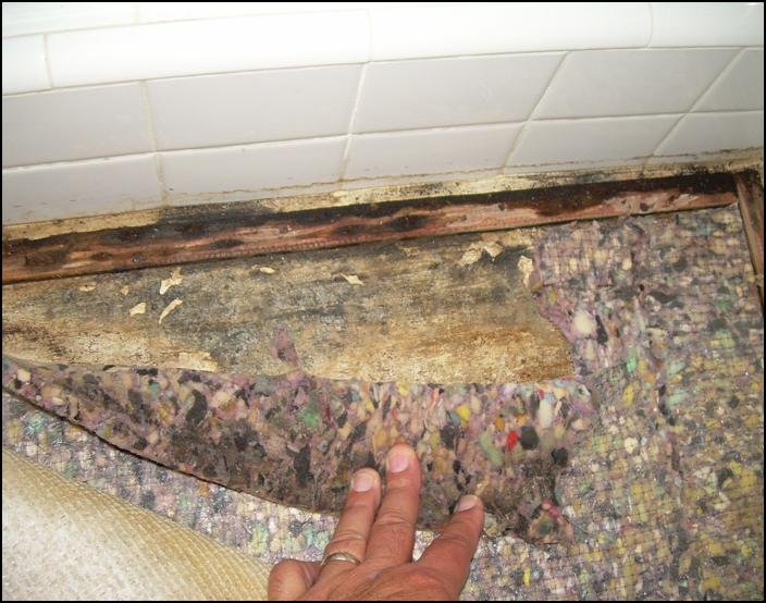 is mold from wet carpet dangerous. Black Bedroom Furniture Sets. Home Design Ideas