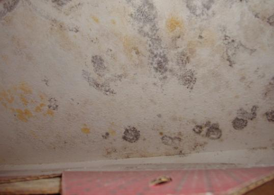 Mold in a wall